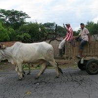 Ox Cart Nicaragua