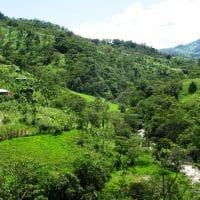Pastoral Scene Amazon
