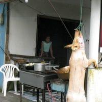 Slaughtered Pig Ecuador