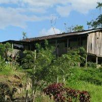 Thatch House Amazon